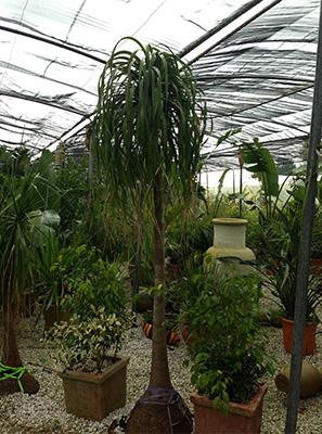 Tunisie garden plantes d 39 ext rieur for Plantes d ornement exterieur